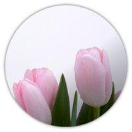 Магниты на холодильник, нежные тюльпаны