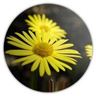 Магниты на холодильник, желтый цветок