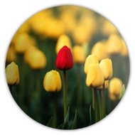 Магниты на холодильник, красный тюльпан