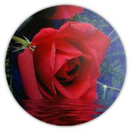 Магниты на холодильник, роза