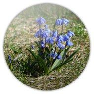 Магниты на холодильник, синенький цветок