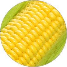 магнит кукуруза
