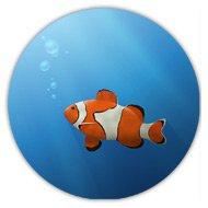 рыбка немо, купить магнит, значок