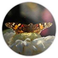магнит на холодильник - бабочка