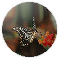 магнитик бабочка